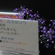 ss20131111kasumisou02