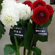 20140510jamnamshinsyu11
