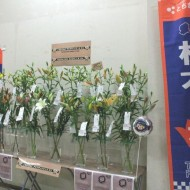 20141110tochigi02