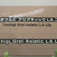20141110tochigi04