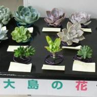 20160518succulent